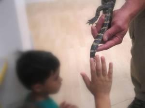 En France, on vous fait toucher des oiseaux, ici des alligators ;)